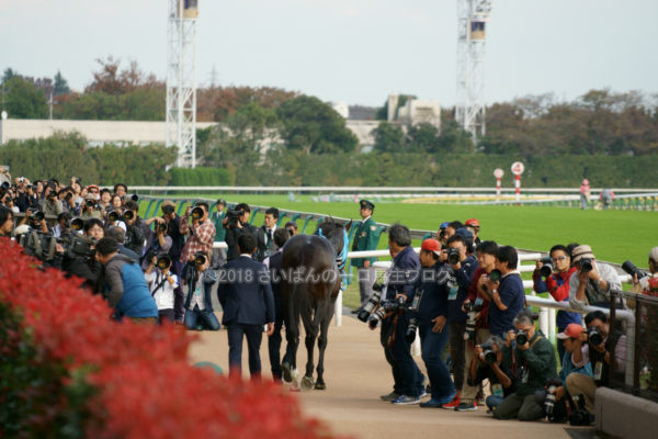 [競馬観戦] オジュウチョウサン目当てに4週連続の東京競馬場へ@18年11月 9