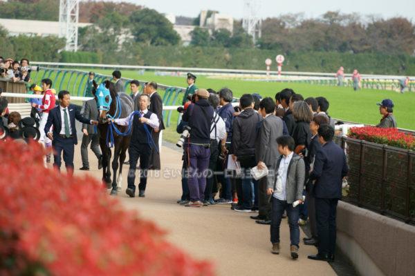 [競馬観戦] オジュウチョウサン目当てに4週連続の東京競馬場へ@18年11月 10