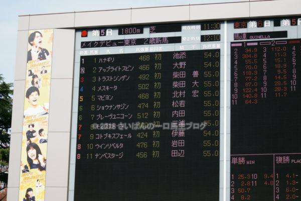 [アップライトスピン] 2歳11月 デビュー戦 東京5R芝1800を競馬場へ現地観戦 1