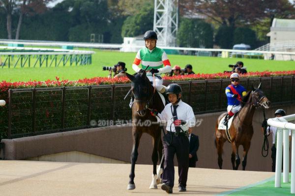 [アップライトスピン] 2歳11月 デビュー戦 東京5R芝1800を競馬場へ現地観戦 6