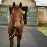 キャロットの2018年度募集馬の馬名が決定しました 6