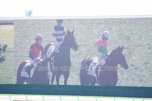 [キアレッツァ] 3歳2月 4戦目 東京競馬場へ現地観戦 15