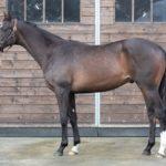 [フルジェンテ] 2歳2月 この中間から騎乗運動を再開しており休養期間中に馬体が成長 45