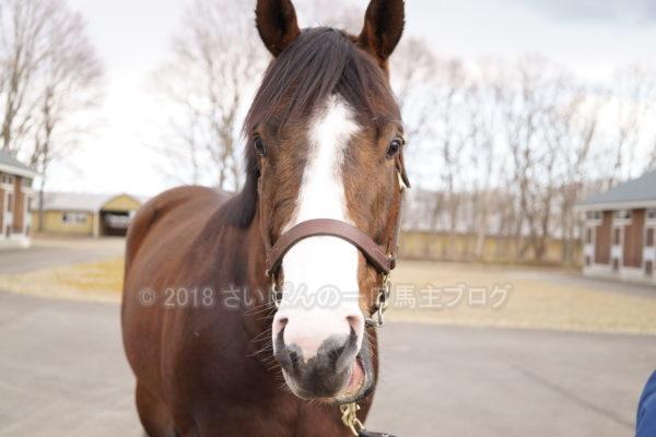 [牧場見学] 2019年春の北海道牧場見学行ってきました(出資馬見学編) 1