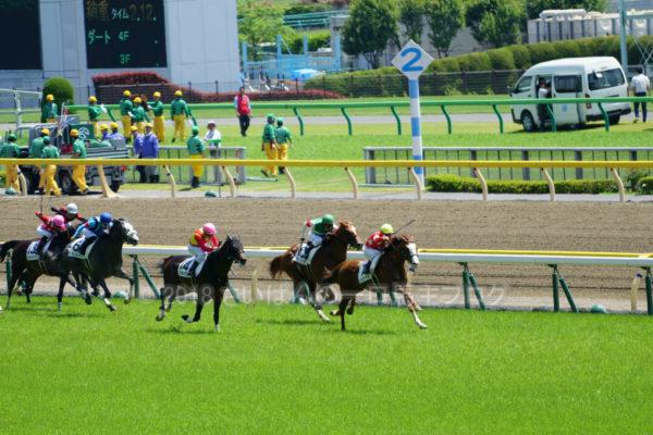 [グランヴィスタ] 3歳5月 3戦目 3歳未勝利戦を東京競馬場現地観戦 8