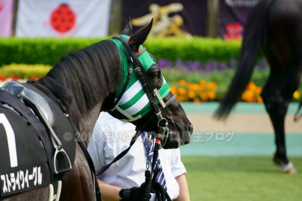 [ストライクイーグル] 6歳6月 25戦目 スレイプニルSを東京競馬場で現地観戦 3