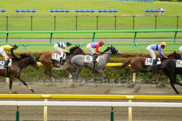[キアレッツァ] 3歳6月 6戦目 3歳未勝利ダート1400を東京競馬場へ現地観戦 5