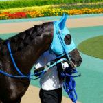 [ヴァイトブリック] 3歳7月 次走の目標はレパードS、新潟競馬場での滞在調整で臨むことになりました 14