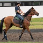 [タイズオブハート] 2歳7月 栗東トレセン・森田直行厩舎へ入厩しました 17