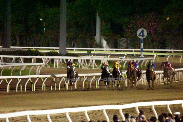 [ストライクイーグル] 6歳8月 26戦目 東京記念トライアルを大井競馬場で現地観戦 12