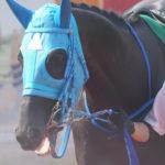 [ヴァイトブリック] 4歳3月 東京の前半戦から競馬を考えていける状況 15