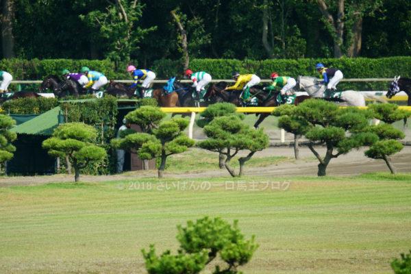 [ヴァイトブリック] 3歳8月 6戦目 レパードSを新潟競馬場へ現地観戦 11