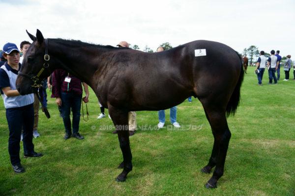 [出資検討] キャロット2019年度募集馬見学ツアー写真 ノーザンファームY5&6(関東牡馬8頭)