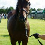 [出資検討] キャロット2019年度募集馬見学ツアー写真 ノーザンファームY3(関西牡馬9頭) 4