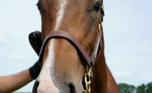 [出資検討] キャロット2019年度募集馬見学ツアー写真 ノーザンファームY5&6(関西牡馬8頭) 37