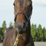 キャロットの2019年度募集馬の馬名が決定しました 7