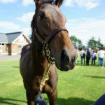 [出資検討] キャロット2019年度募集馬見学ツアー写真 ノーザンファームY9&10(牝馬8頭) 28