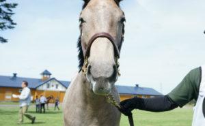 [出資検討] キャロット2019年度募集馬見学ツアー写真 早来ファーム(牝馬8頭) 69