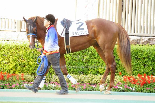 [アランブレラ] 4歳11月 11戦目 2勝クラス・東京芝2000の競馬を現地観戦