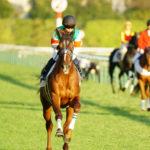 [アランブレラ] 4歳11月 11戦目 2勝クラス・東京芝2000の競馬を現地観戦 3