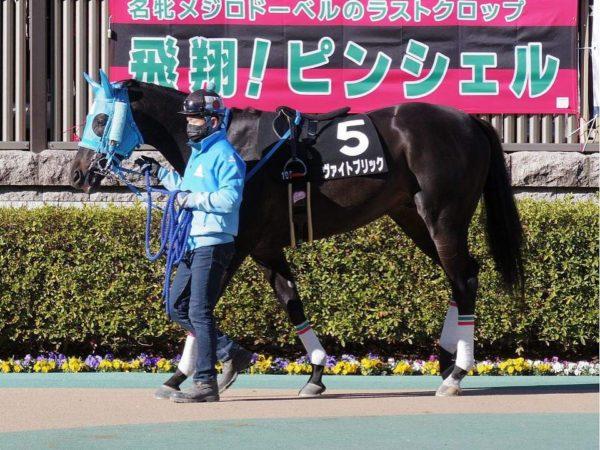 [ヴァイトブリック] 4歳2月 9戦目 東京・白嶺Sに出走して3着 1