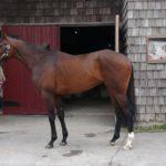 [レッドベルジュール] 3歳4月 復帰レースは定めず馬に合わせて進めていきます 19