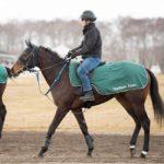 [ククナ] 2歳5月 栗田徹厩舎に入厩、ゲート試験合格!「血統の良さも感じられ期待をしている馬」 12