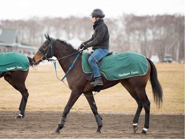 [ククナ] 2歳5月 栗田徹厩舎に入厩、ゲート試験合格!「血統の良さも感じられ期待をしている馬」 1
