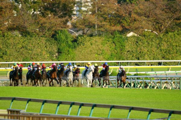 [ククナ] 2歳10月 3戦目 アルテミスSを東京競馬場で現地観戦 8