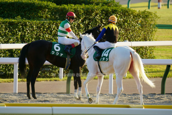 [ククナ] 2歳10月 3戦目 アルテミスSを東京競馬場で現地観戦 16