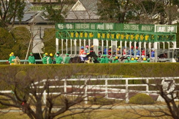 [レッドベルオーブ] 2歳12月 4戦目 朝日杯フューチュリティSを阪神競馬場へ現地観戦!